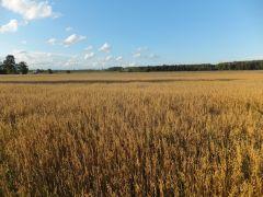 Ekologinių javų auginimas ir tvarkymas