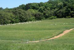 Lauko aptvėrimas el. piemeniu. Apsauga nuo vilkų.