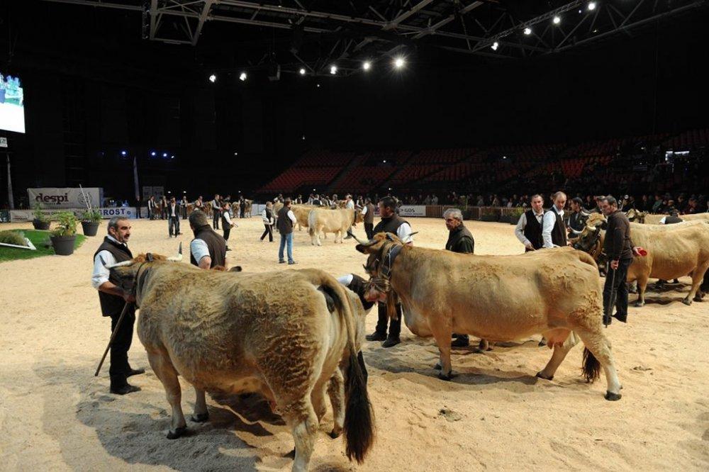 Ring-vaches-à-viande-Sommet-de-lelevage-2016-096-1024x681.jpg